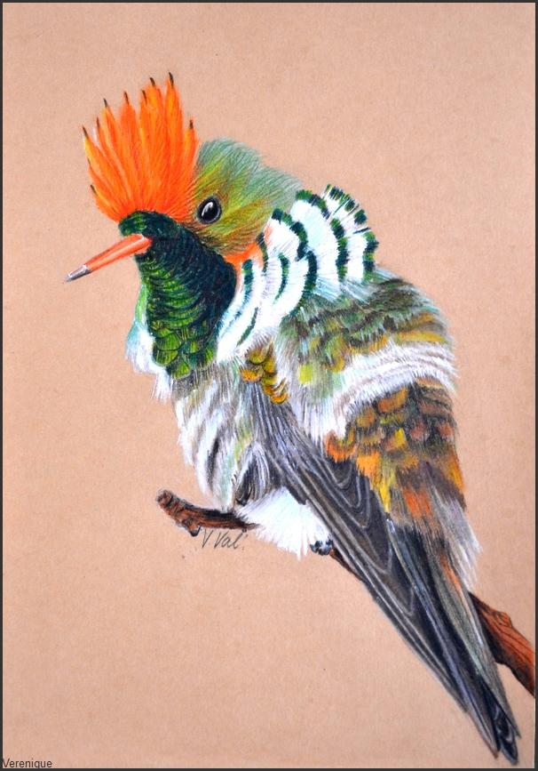 Lophornis magnificus by Verenique