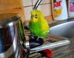 My little bird's friend 1. by Verenique