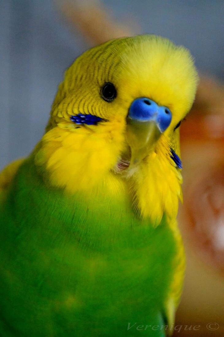 My little bird's friend 13. by Verenique