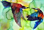 Merops apiaster