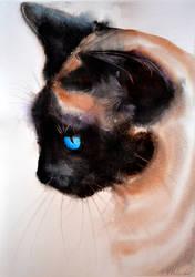 Siamese cat. by Verenique