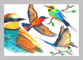 Bee-eaters by Verenique