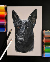 Snowy doggie by Verenique