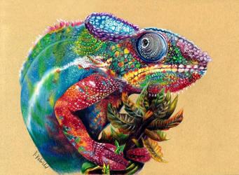 Multicolored chameleon by Verenique