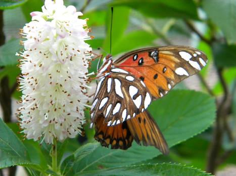 Stock Butterfly 14