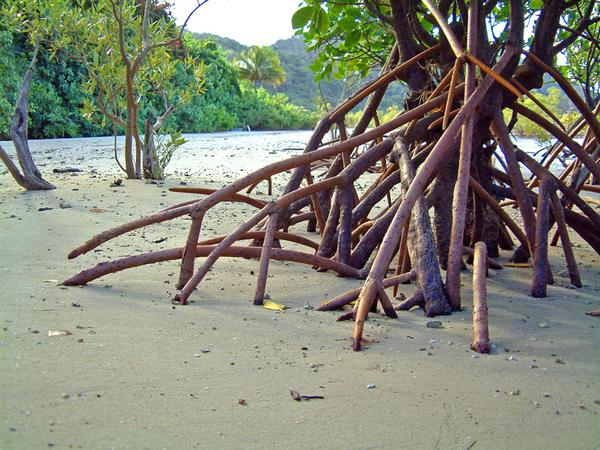 Mangroves by LeighWhittaker