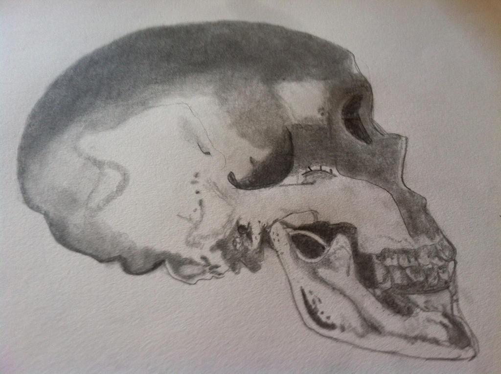 Skull by babybee1