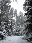 Winter Forest BG