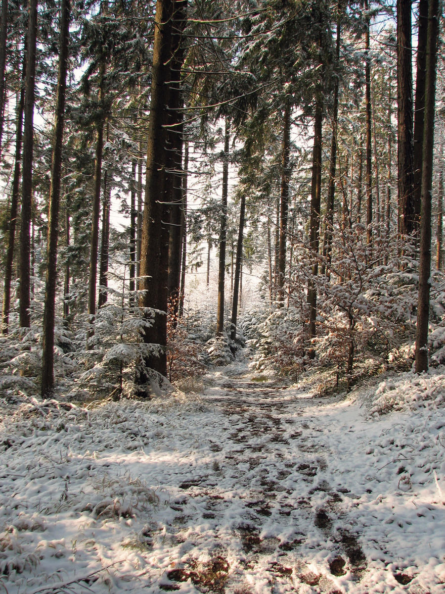 Winter Forest Background Tumblr Safari Wallpapers