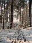 Winter Forest Background 2