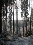 Winter Forest Background 3