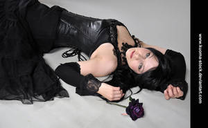 Black Rose 2 by Kuoma-stock