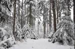 Winter Background 1
