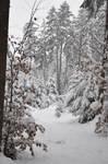 Winter Background Stock 2