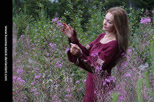 Fireweed 8 by Kuoma-stock