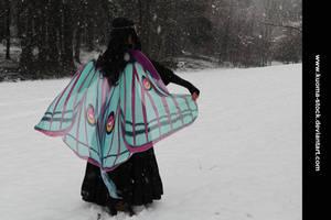 Winter Moth 2