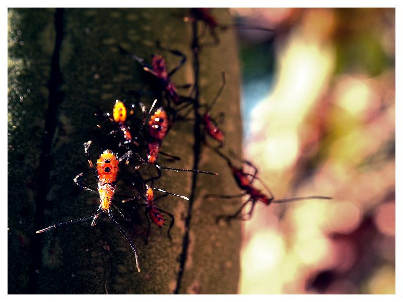 Strange Creatures. by Guto-Kun