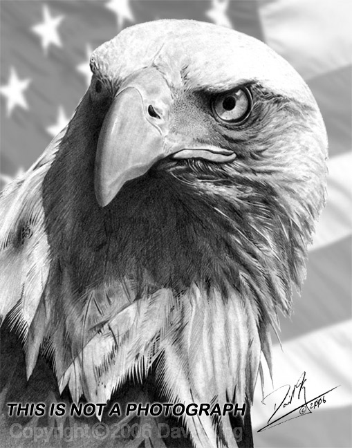 Image Result For Eagle Flying Coloring