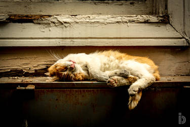 Sleeping Furball by ilkerdemirbolat