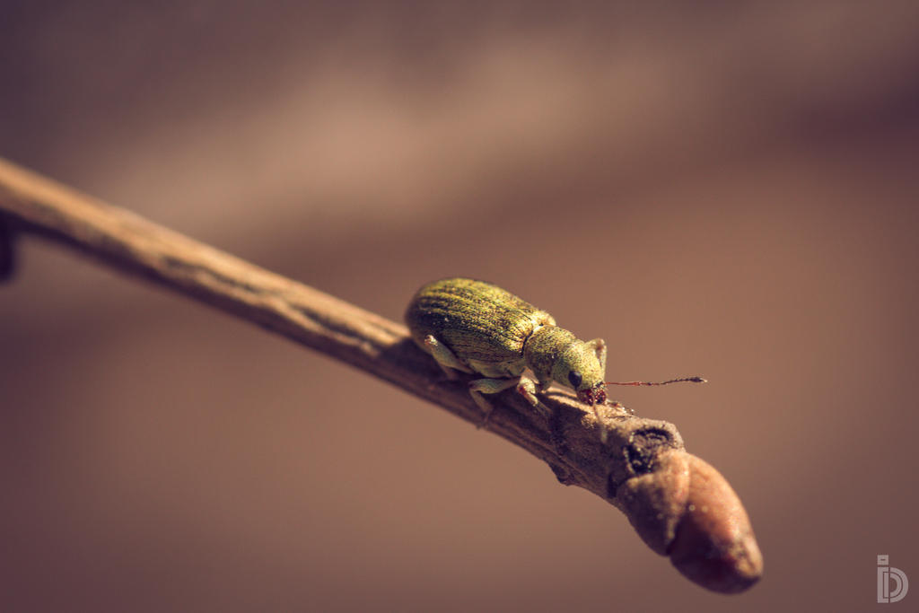Tiny Fella by ilkerdemirbolat