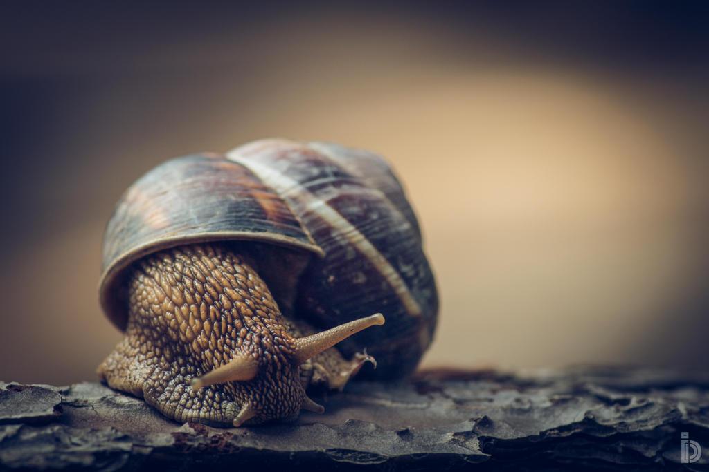 Snailin' Around II by ilkdem