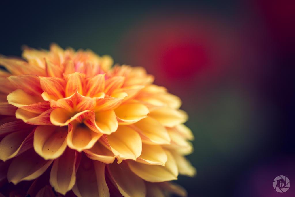 Queen of the Garden by ilkerdemirbolat