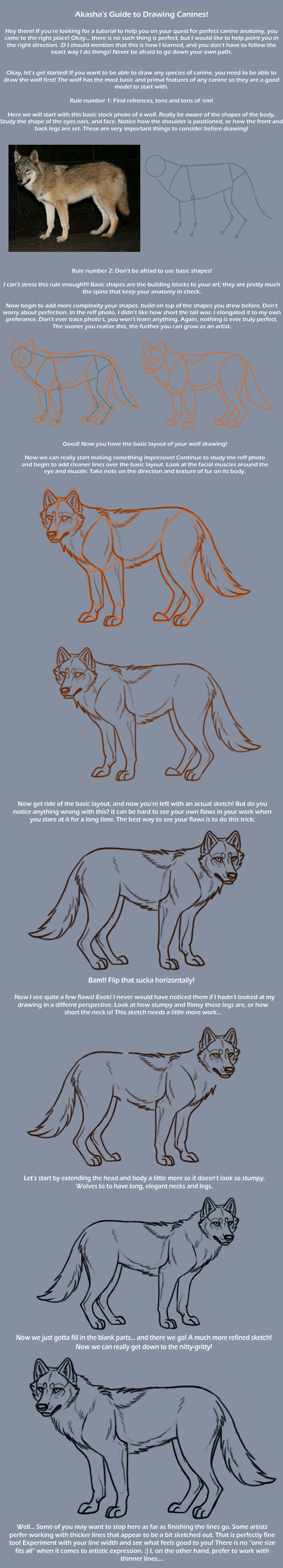 Canine Anatomy and Lineart Tutorial Pt.1 by Sedillio on DeviantArt