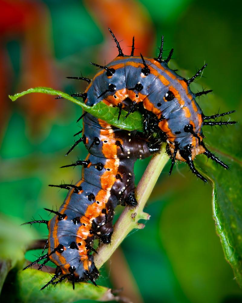 Caterpillar by JaggedTech