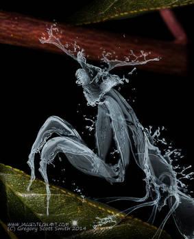 Water Mantis