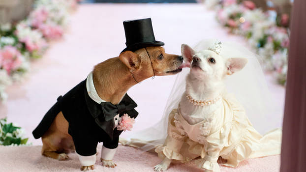 Dog Couple Wedding Dress - Paul Hayward Bangkok