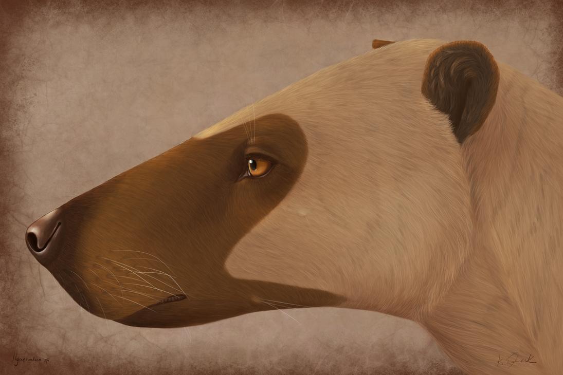 Hyaenodon by Gardi89