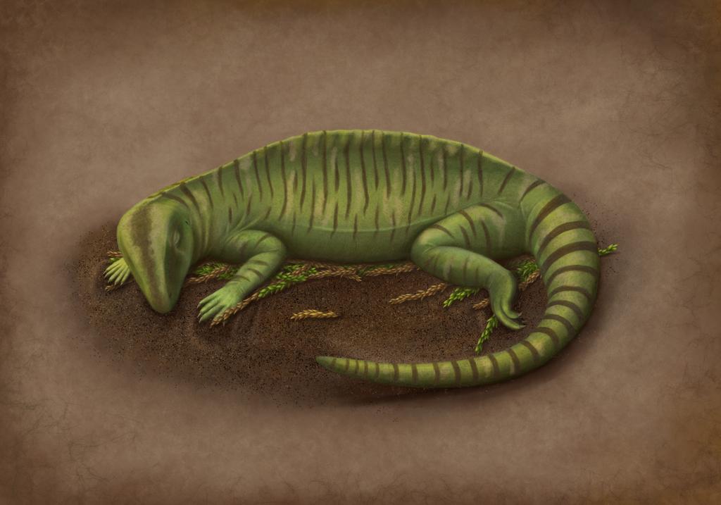 Sleeping Echinerpeton intermedium by Gardi89