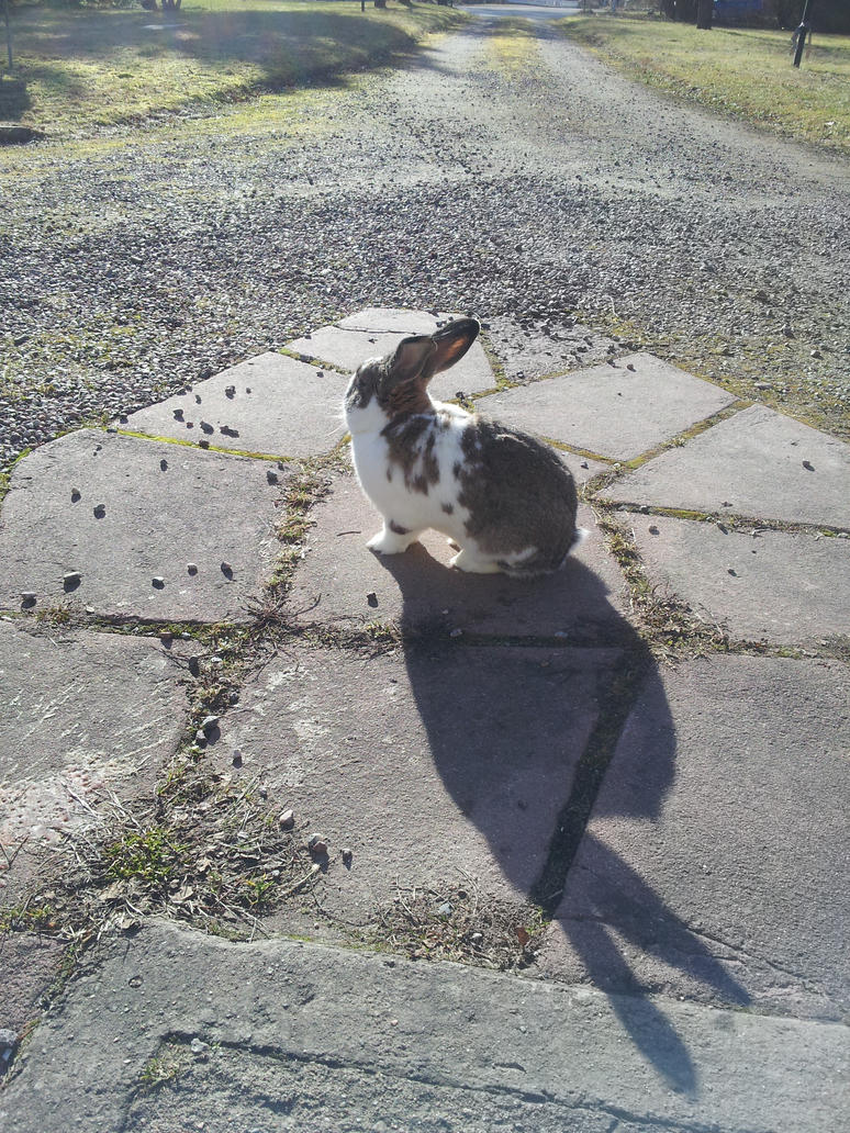 how to make a bunny shadow