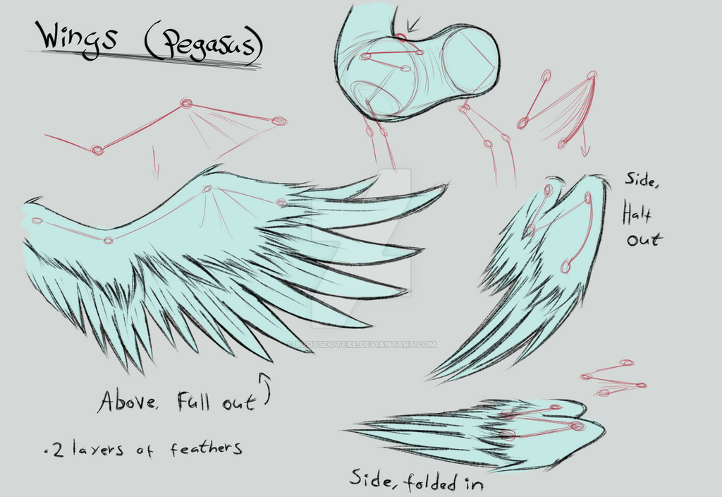 mlp fim wings reference sheet pegasus by lividcreativity on