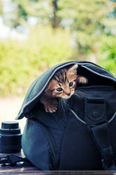 Kitty zoom kit. by photosopher