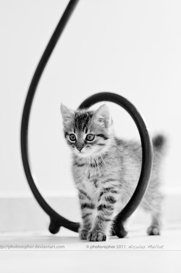 Kitty vortex by photosopher