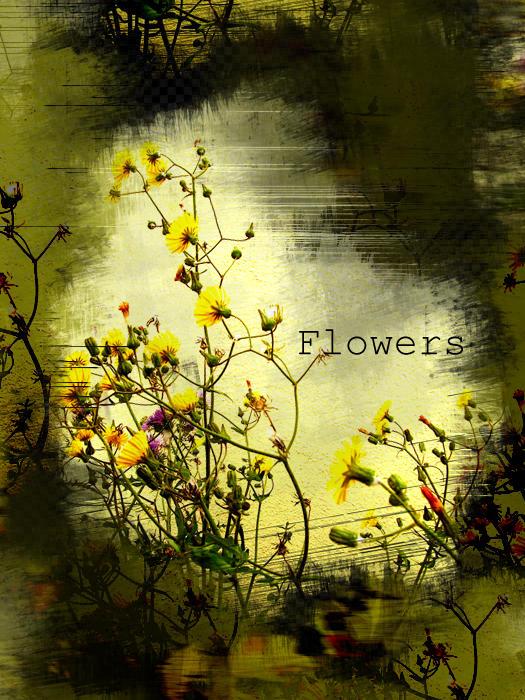 flowers by wetGround