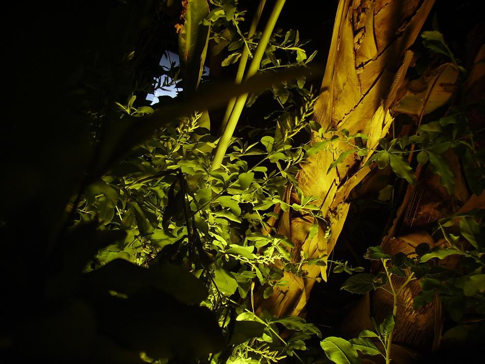 bucolicum acid02 by wetGround