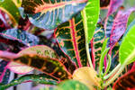 Colorful Plant and Leaf