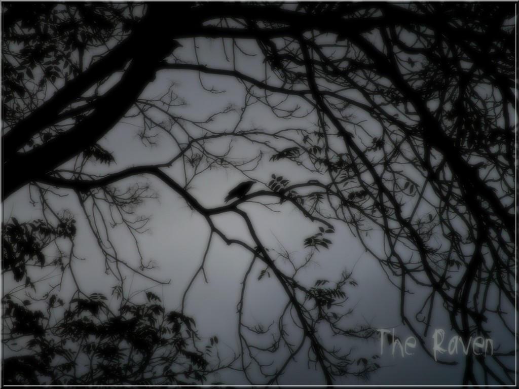 The Raven by ErratikLyon