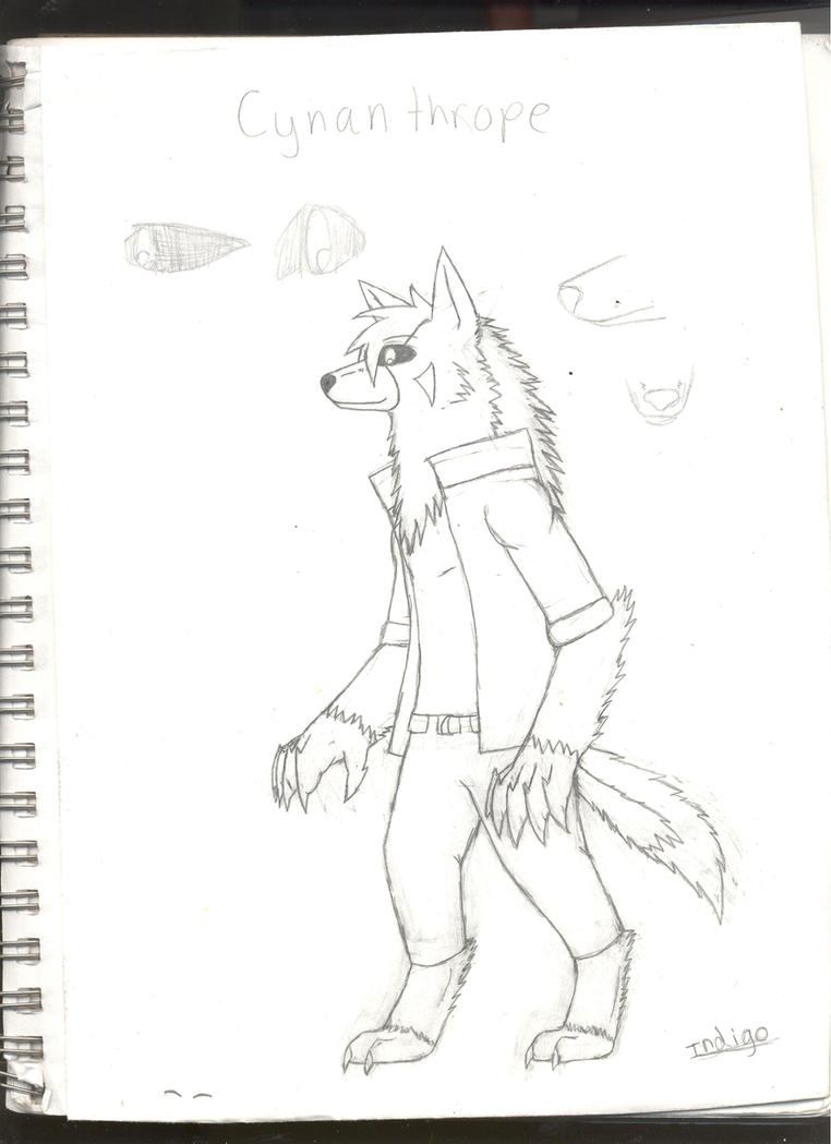 Indigo Weredog ref by GrimmWolf360