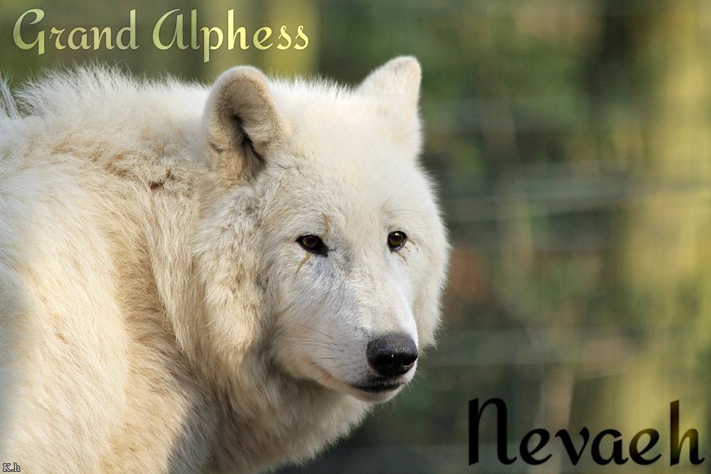 Nevaeh by WhiteWolfCrisis13