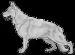 German Shepherd Greyscale