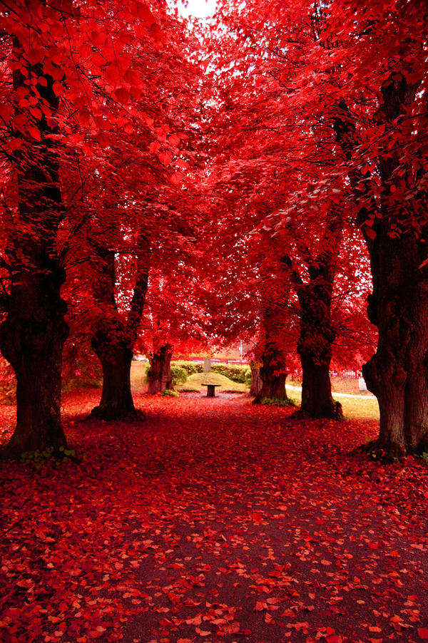 Strawberry Forest by elubelu