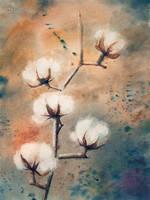 cotton flowers by KarolineJuzanx
