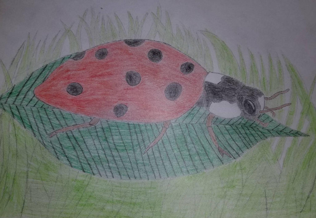 71 Ladybug by asantedaace