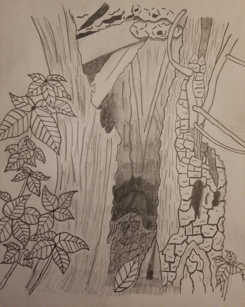 Tree sketch stump  by asantedaace