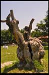 old tree by emrepullukcu