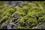 tree moss by emrepullukcu