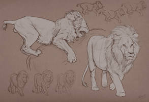 Lion studies by Matija5850
